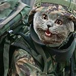 sergeantkitty